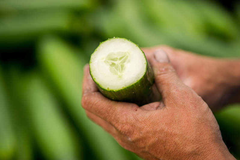 Close up of man's hands holding a cut open cucumber in Cordova, Maryland, USA. (Photo by: Edwin Remsburg/VW Pics via Getty Images)