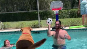 Canine Michael Jordan? Pup gets nothing but net in pool basketball