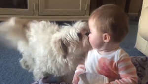 Cuteness overload: Puppy and baby love each other!