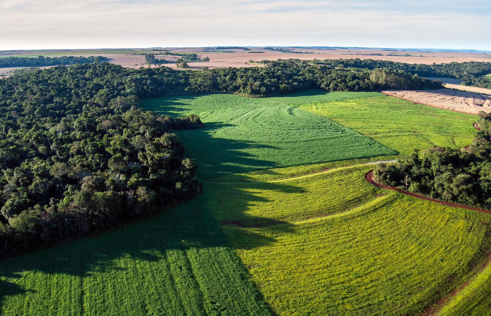 Slide 13 of 26: Agricultural developments, namelythe creation of soybean fields such as those pictured, plus deforestation for the production of timber, sugar cane, coffee and cattle, have resulted in severe habitat loss (only 7% of Brazil's Atlantic Forest exists today), forcing many endemic species to the brink of extinction.