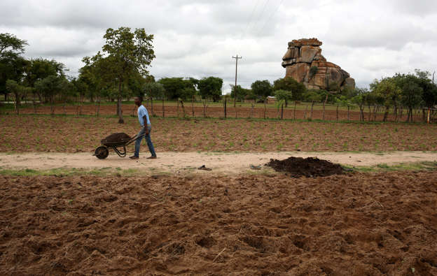 Zim's listed agro-firms under threat
