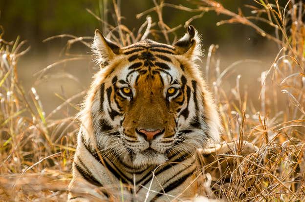 Austria: 2 tiger cubs found in bathtub at apartment