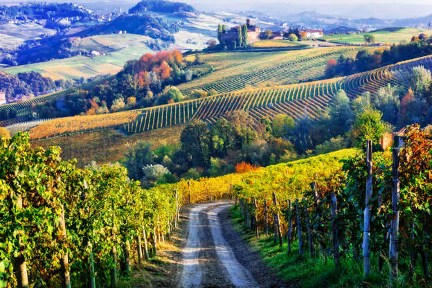 Diapositiva 5 di 59: Vineyards of Italian countryside in autumn