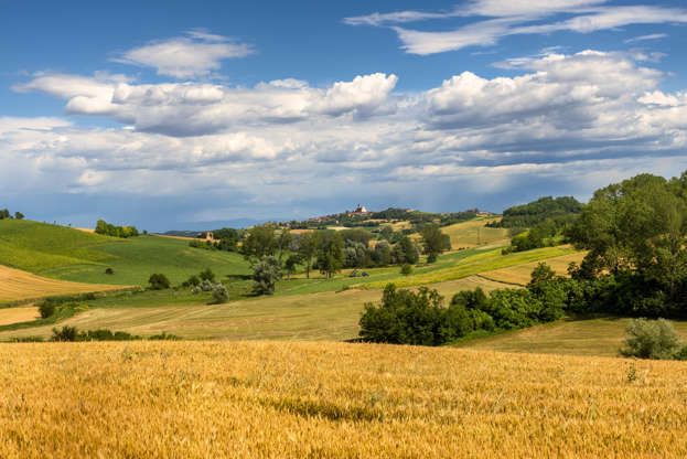Diapositiva 3 di 59: Country landscape of Monferrato (Asti, Piedmont, Italy) at summer, with vineyards