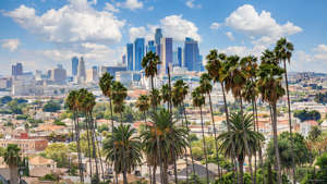 a group of palm trees with a city in the background: Increase in the number of heat waves per year: Not statistically significant Increase in the length of the heat wave season: 21-40 days longer