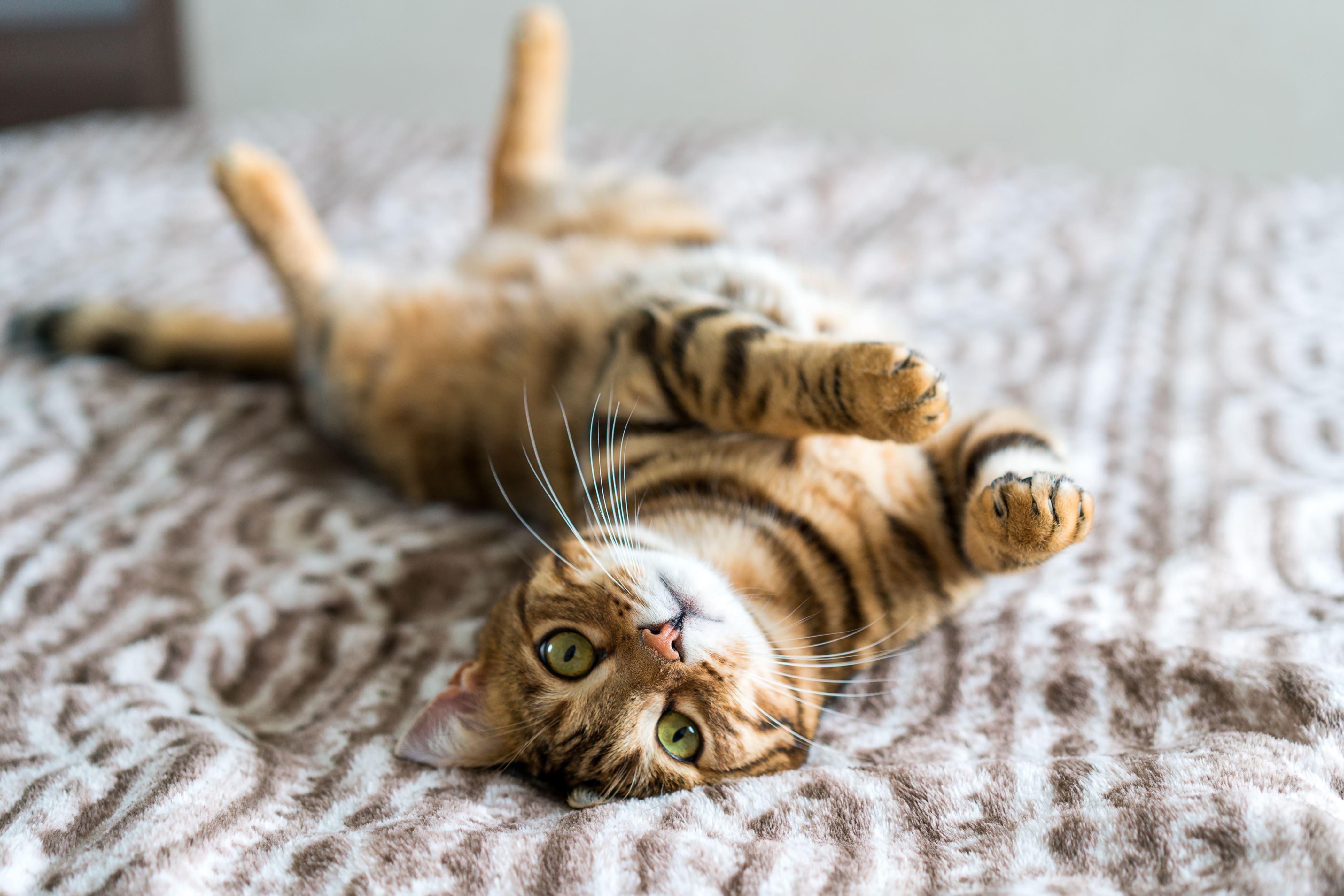 Cat kvinne singel