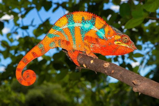 Photos: Incredible animals of Madagascar