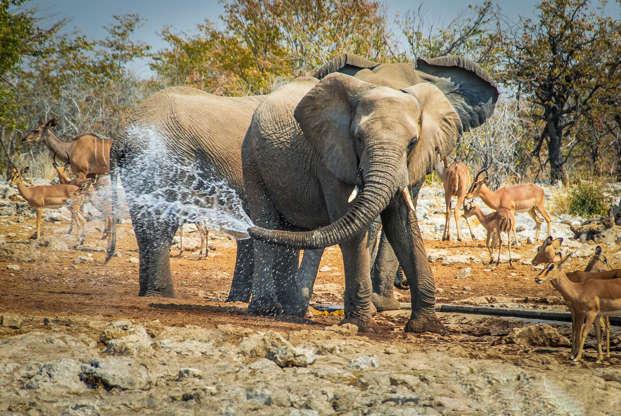 幻灯片 30 - 1: Elephant jokes with water in his trunk Etosha National Park, Namibia, Africa