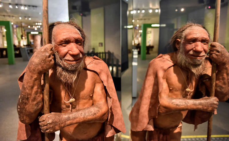The reconstruction of a Homo neanderthalensis, who lived within Eurasia from circa 400,000 until 40,000 years ago, mirrors at the Neanderthal Museum in Mettmann, Germany, located at the site of the first Neanderthal man discovery, Wednesday, July 3, 2019. The museum features an exhibition centered on human evolution. (AP Photo/Martin Meissner)