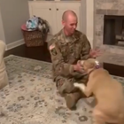 Overjoyed pitbull greets owner after return from one-year deployment