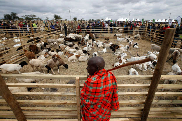 Dried-up pastures push Kenya's Maasai to mix cattle with crops