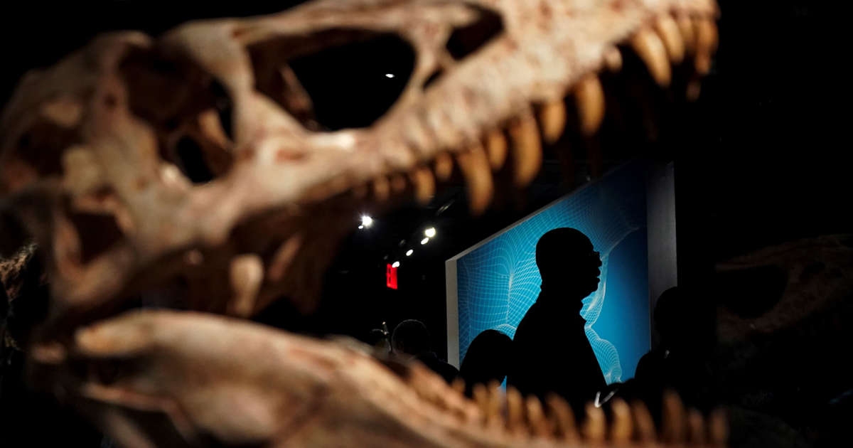 The Mystery of Bizarre Holes in T  Rex's Head Might Finally