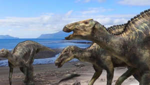 New duck-billed dinosaur discovered in Japan