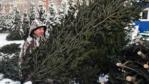 NOVOSIBIRSK, RUSSIA - DECEMBER 14, 2017: A man carries a fir tree on sale at a Christmas tree market. Kirill Kukhmar/TASS (Photo by Kirill Kukhmar\TASS via Getty Images)