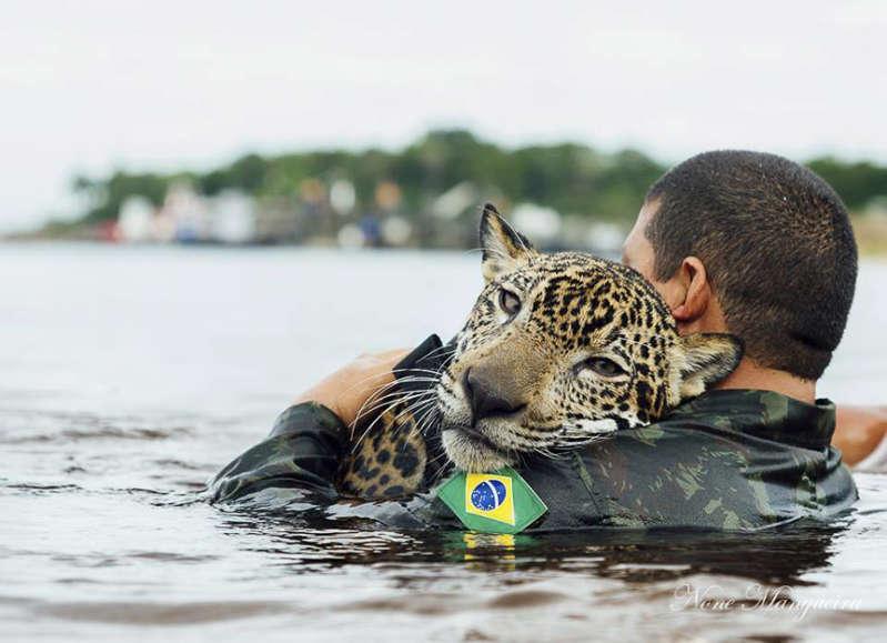 Noticia falsa: un jaguar rescatado de los incendios en la Amazonia
