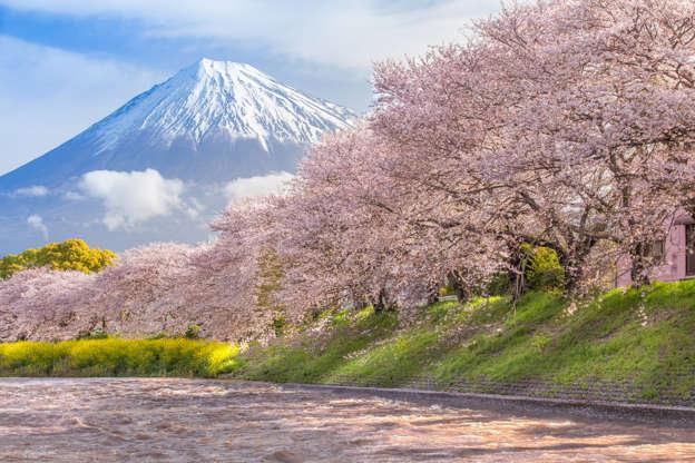 24 枚のスライドの 8 枚目: Beautiful Mountain Fuji and sakura cherry blossom in Japan spring season