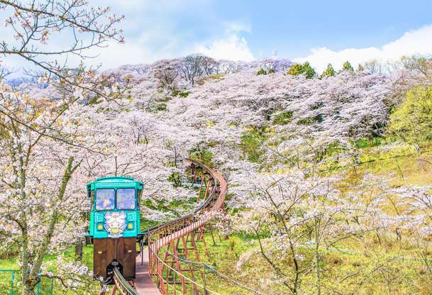 24 枚のスライドの 14 枚目: Japan - April 11, 2016 : Tourist Tram ran on the railway down from hill of Funaoka Castle Ruins Park in Spring, Sendai