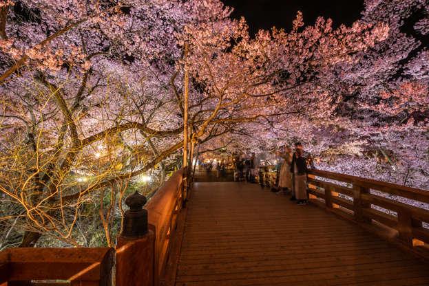 24 枚のスライドの 11 枚目: Nagano, Japan - April 21, 2019 : The people in blurry visiting light up of Cherry blossoms at Takato Castle Site Park in Nagano, Japan.