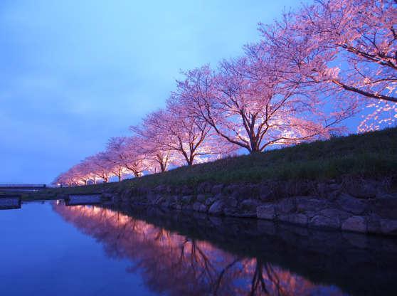 24 枚のスライドの 18 枚目: Cherry blossom, Kusabagawa-river, Fukuoka, Japan