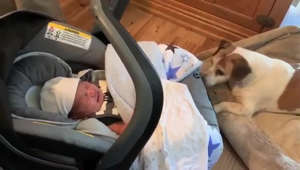 Dog rocks crying baby back to sleep