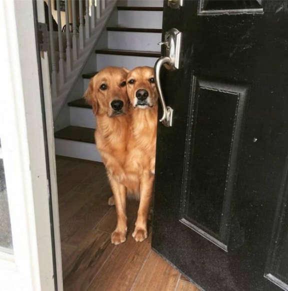 Diapositiva 19 de 35: …los dos perros son inseparables. Literalmente.