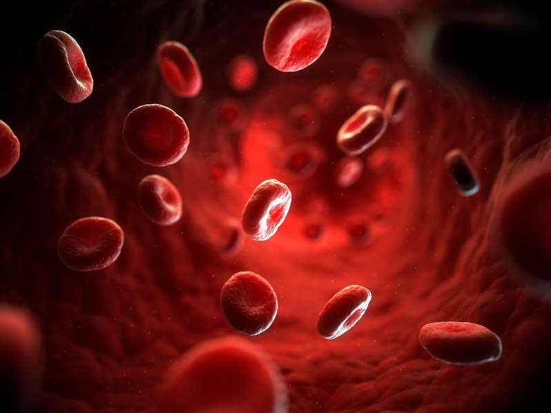 Human Red blood cells