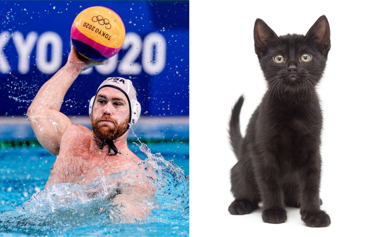 Cat Tries to Join Water Polo Match