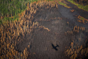 a close up of a tree: This aerial picture shows the shadow of an aircraft of the Air Forest Protection Service flying over a burned forest outside the village of Berdigestyakh, in the republic of Sakha (Yakutia) in Siberia, Russia on July 27.   Dimitar Dilkoff—AFP/Getty Images