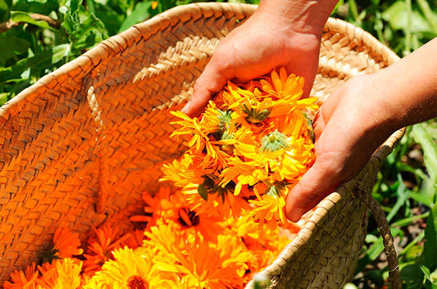 7 Magical plants to attract luck, calm, happiness and inner peace 3