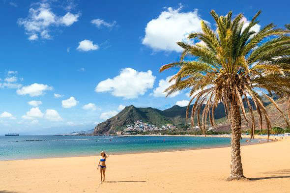 a beach with palm trees: Tenerife