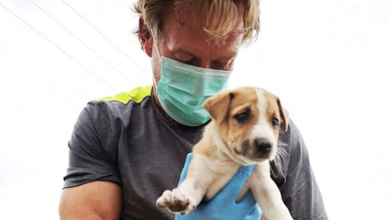 a person holding a dog: Paul 'Pen' Farthing runs an animal charity in Afghanistan. Pic: Nowzad