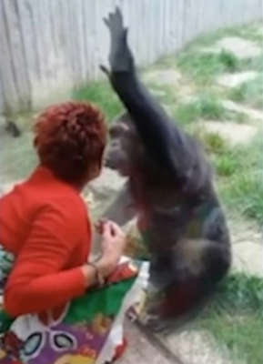 Adie and Chita blow each other kisses when she visits the Belgian Zoo Pic: ATV