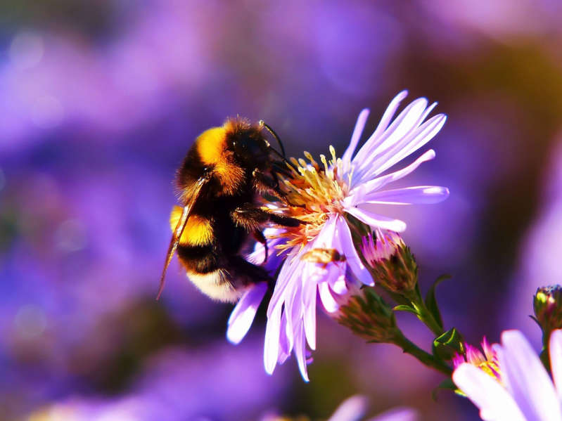 a close up of a flower: For bees, colorful flowers are neon signs pointing to a rest stop.