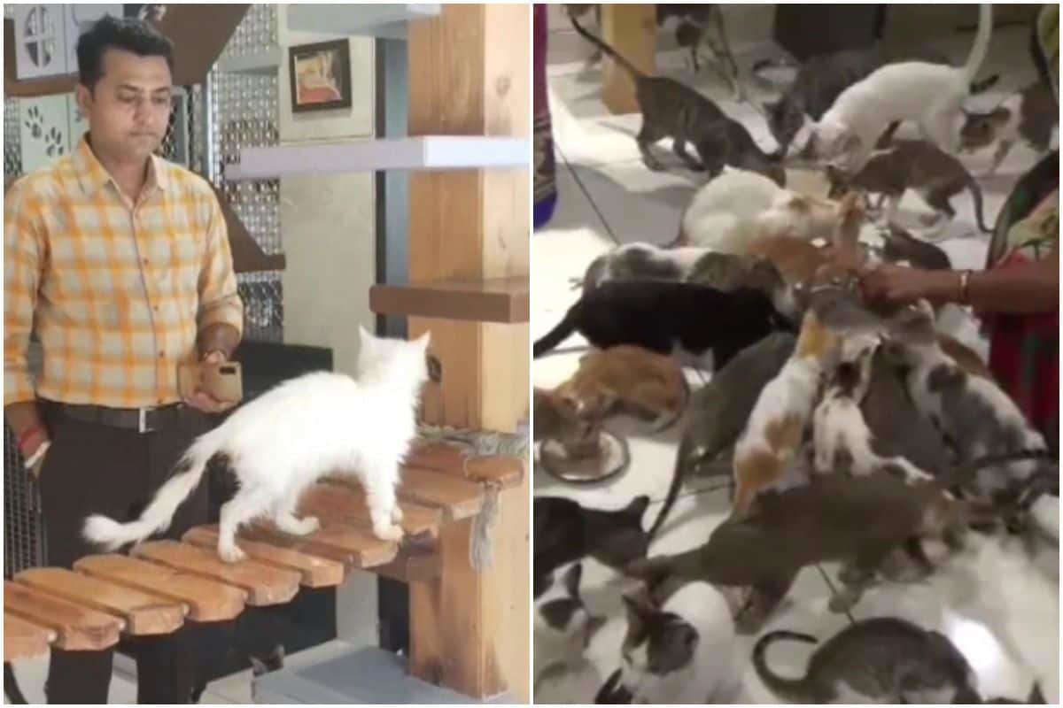 The Cat House in India