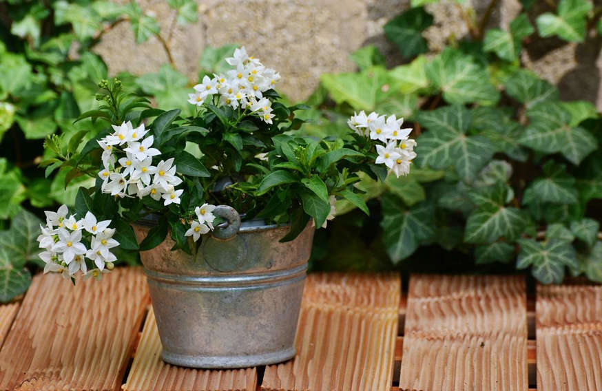 7 Magical plants to attract luck, calm, happiness and inner peace 0