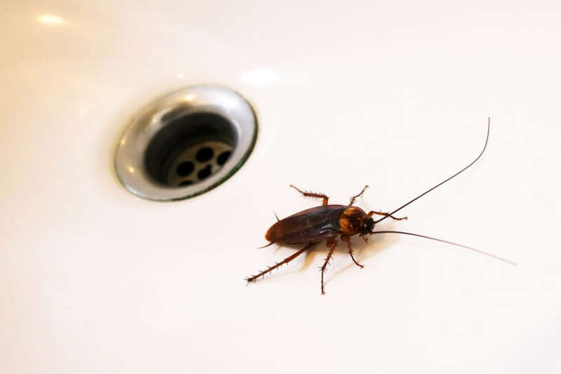 Extra tips for keeping cockroaches away from the kitchen