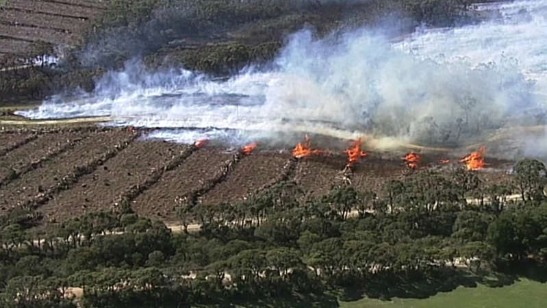 a herd of sheep standing on top of a mountain: The fire is burning through the rural area south of Adelaide. (ABC News)