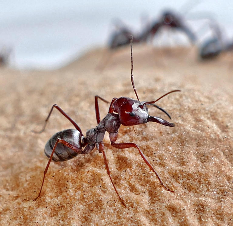 Ants have a secret when it comes to their overwhelmingly strong teeth. One that could help us engineer technology.