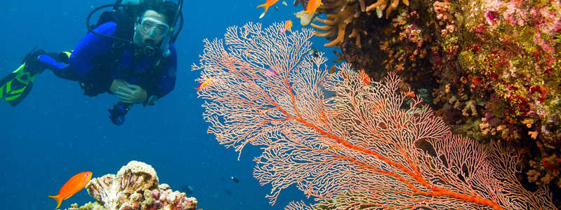 a group of coral: Great Barrier Reef, Australia (Shutterstock)