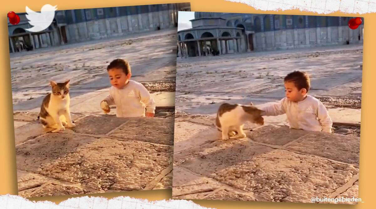 Boy Shares Food with a Cat