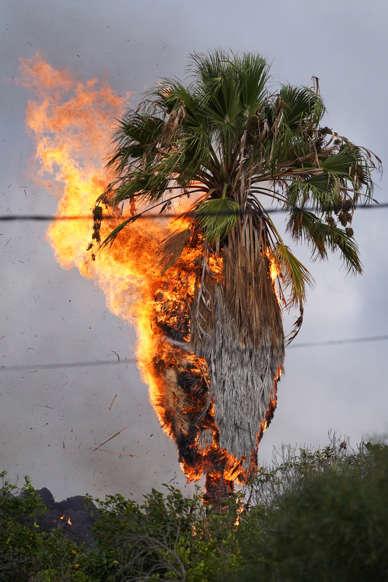 Diapositiva 2 de 17: El fuego hace arder palmeras y cultivos. También está arrasando decenas de viviendas e infraestructuras. La catástrofe es total.