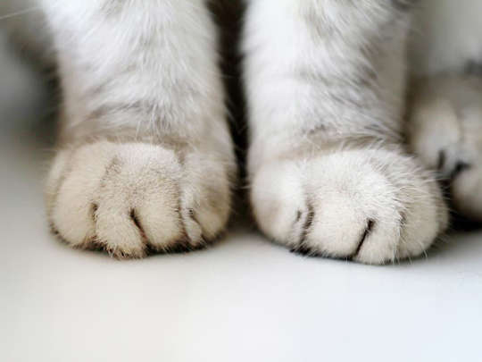 Pittsburgh May Soon Outlaw Declawing