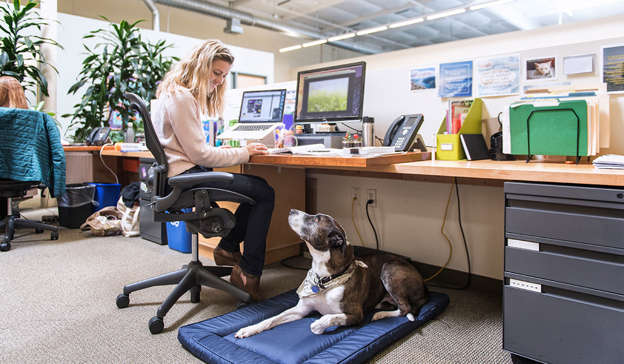 Now that offices are back open for many workers across the country, Claire Byrne Live addressed the debate around bringing dogs to the workplace. Pic: Getty