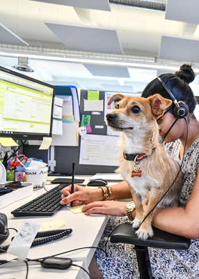 In a segment supported by Dog's Trust, broadcaster Aonghus McAnally was on to discuss his stance on bringing a dog to the office, which he was very much against. Pic: Andia/Universal Images Group via Getty Images