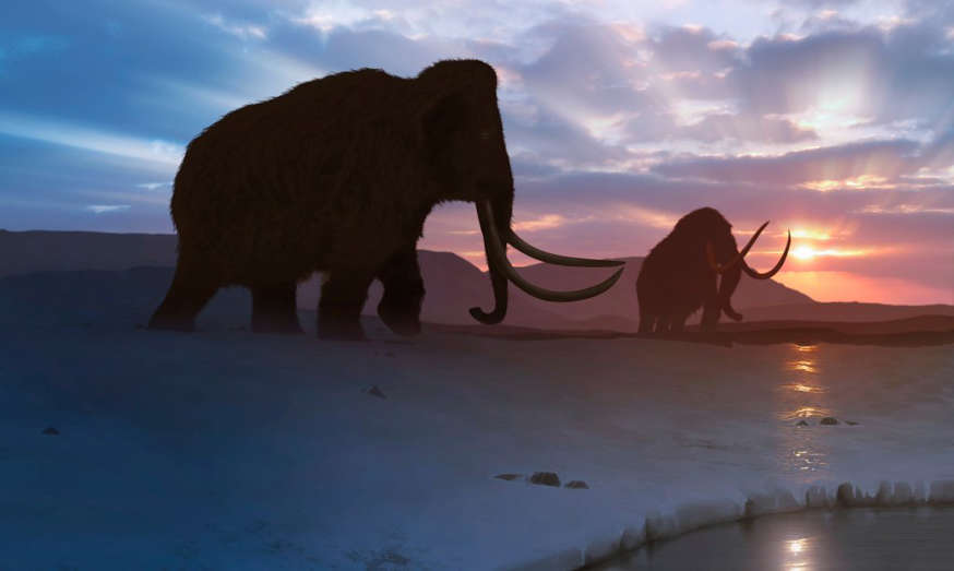 a dog with a sunset in the background: Artwork of the woolly mammoth (Mammuthus primigenius), or tundra mammoth. This animal lived during the Pleistocene epoch and into the early Holocene, and as such coexisted with humans.