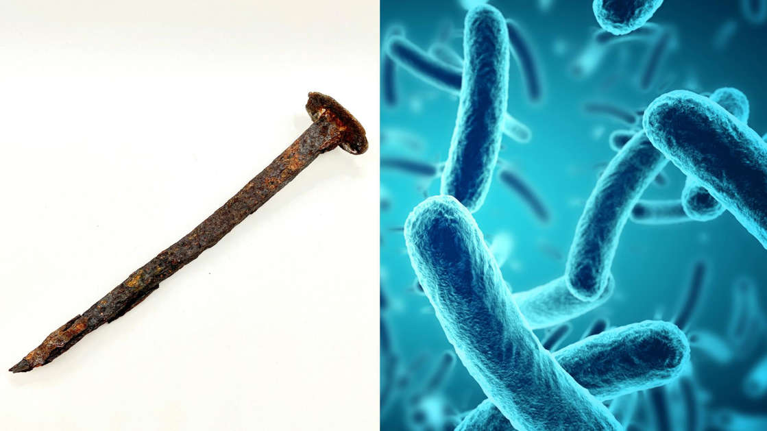(Left) Stock image of a rusty nail. (Right) Stock illustration of bacteria under a microscope. A Chilean researcher hopes that a metal eating bacteria that ate a nail in three days in her lab could be used to clean up mining waste.