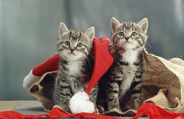 21f4b866b45c 50 συναρπαστικές πληροφορίες για τη γάτα σας