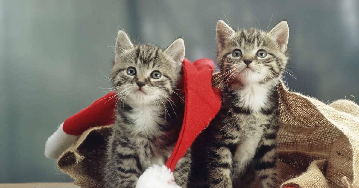410c468edc4e 50 συναρπαστικές πληροφορίες για τη γάτα σας