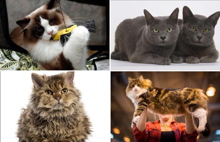 "18/"" Wide RAGDOLL Street Sign cat breed feline kitty kitten Indoor//Outdoor"