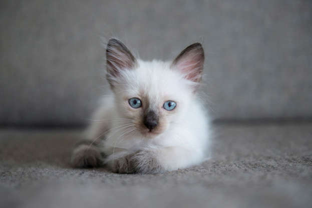 What is the best cat breed for your zodiac sign?